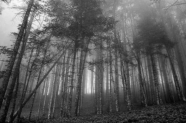 AlberiForeste