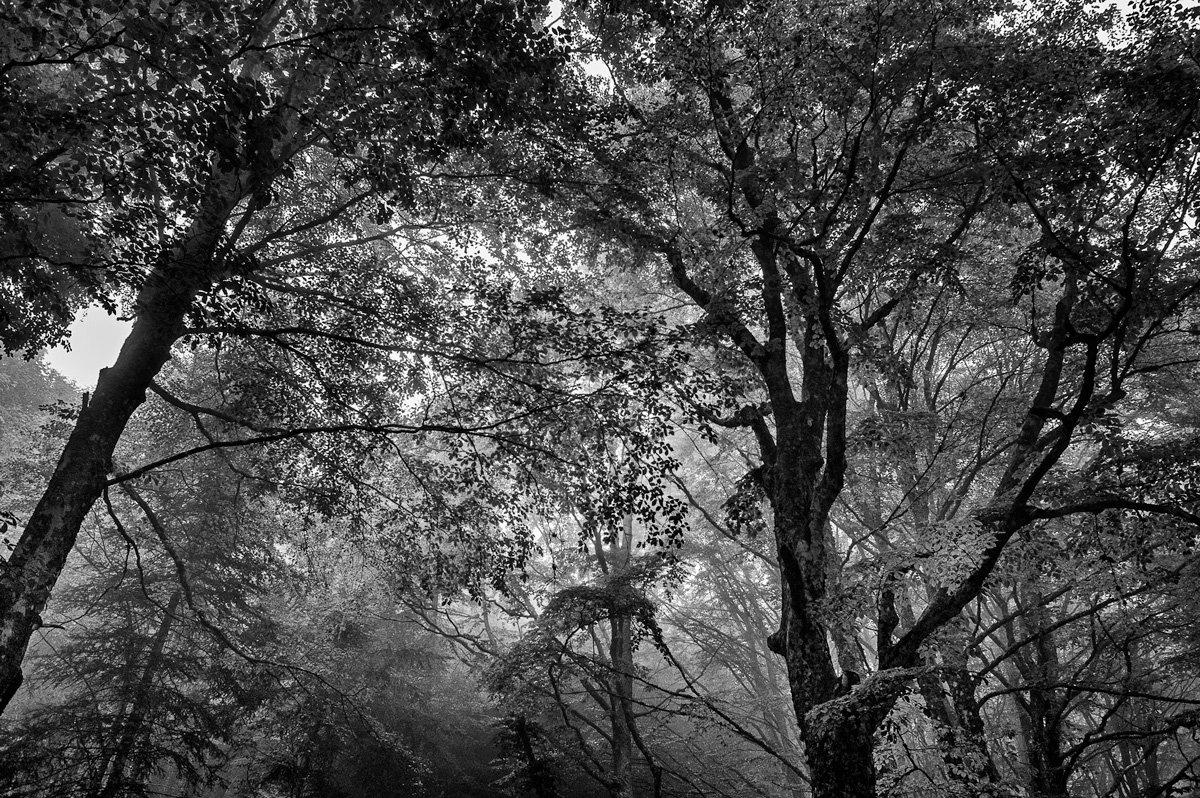 Nel mezzo delle foreste casentinesi