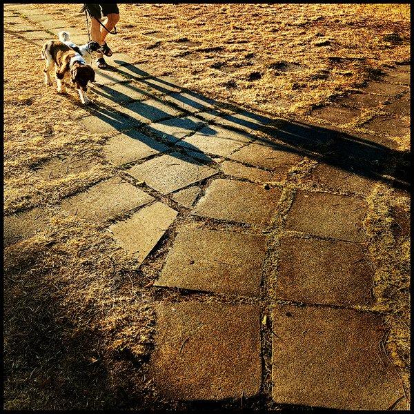 un cane e il suo padrone in controluce