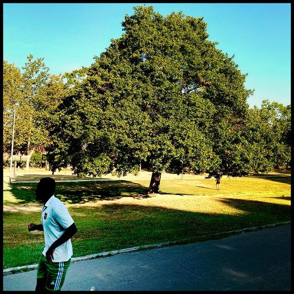 una corsa al parco